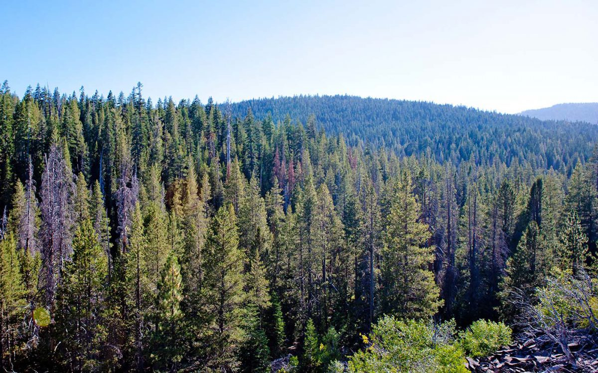 Tahoe forest project